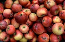 Foods to watch out for, to prevent choking - Apples